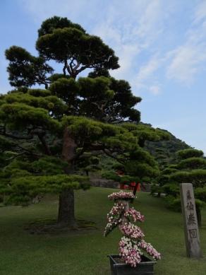 Tree in famous Sengan-en Garden, Kagoshima.