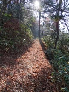 Wood path close to Takayama.