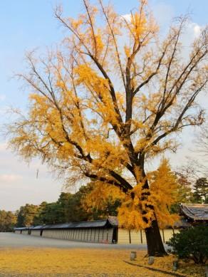 Imperial Garden, Kyōto